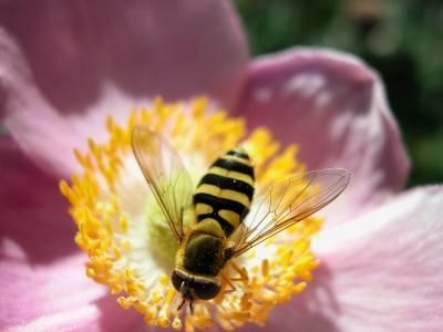 Natural remedies for insect bites and stings   Happy ... - photo#24